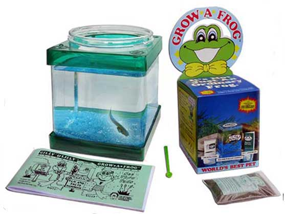 New Larger Growafrog see-thru tadpole kit